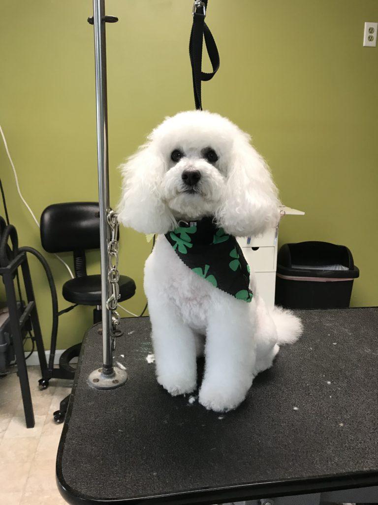 full groom mobile dog grooming mobile pet grooming